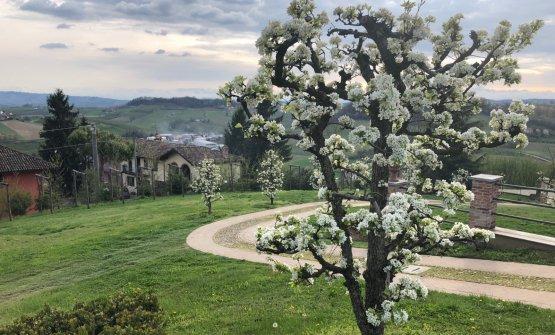 L'albero di pere madernassa, frutto che dà il nome al ristorante, da un anno e mezzo con stella Michelin