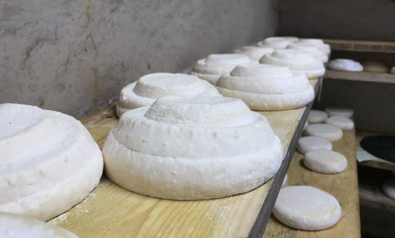 L'unico Montébore prodotto a Montébore: storia, leggenda e rinascita di un formaggio che era perduto