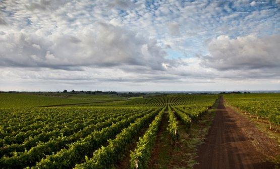 Le vigne a Velletri