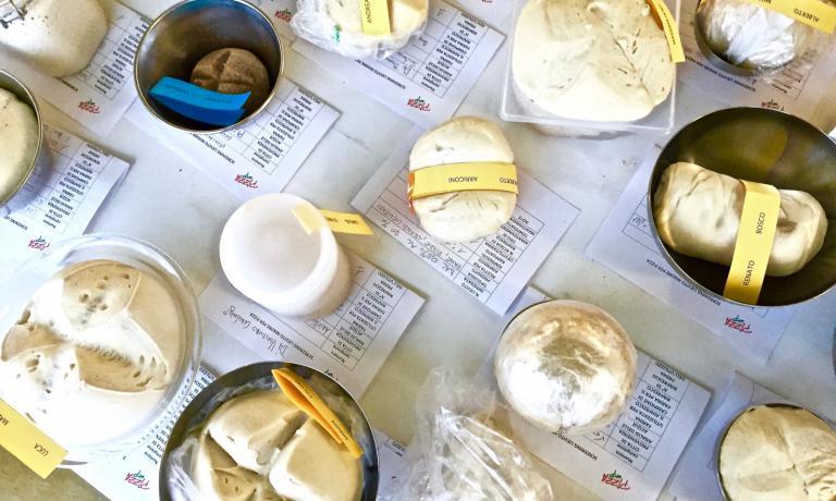 I campioni di lievito madre portati a PizzaUp dai pizzaioli presenti al simposio. La professoressa Ambrogina Pagani (Scienze e tecnologie alimentari) e la microbiologa Laura Franzetti, entrambe della facoltà di Agraria dell'Università Statale di Milano, hanno catalogato - con il supporto tecnico di Federica Racinelli - tali campioni. Saranno analizzati nei prossimi mesi in laboratorio, verrà descritto il loro profilo microbiologico; ogni lievito avrà così la sua carta d'identità e tutti insieme comporranno una mappa della biodiversità