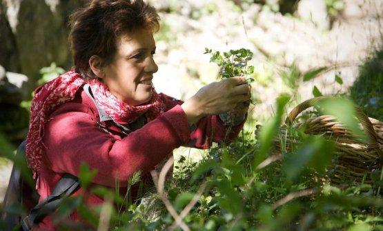 Mariangela Susiganmentre raccoglie erbe spontanee