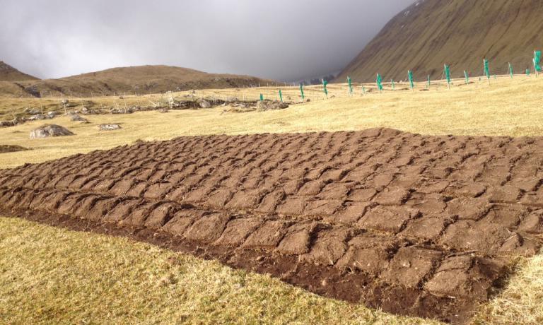 Un campo di patate all'ingresso del villaggio di Giógv. Essendo l'arcipelago quasi privo del tutto di alberi e piante, tuberi e ortaggi ipogei hanno molta importanza nella dieta. Nella capitaleTórshavn il numero di vegetariani e vegani è in crescita