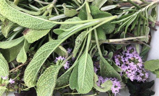 Ilmix di aromatiche fresche