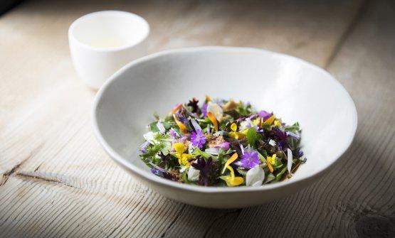 Mountain salad(photoAlex Moling)