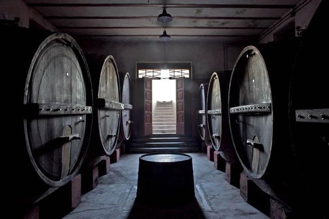 La cantina di invecchiamento doveil Villa Bucci Riserva si affina peralmeno un anno e mezzo in botti di Rovere di Slavonia da 50 e 75 hl