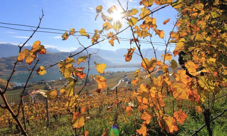 La cantina Erste+Neue sta lavorando a un vigneto sperimentale per recuperare la Vernatsch, nome in tedesco della Schiava, con cui si produce un vino particolare e nobile come il Kaltersee