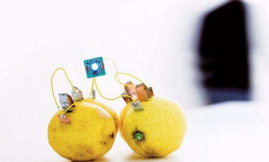 Lemon Ledon(2012)