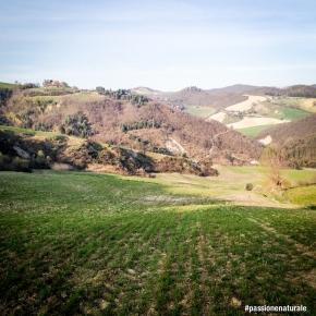 Torniamo a passeggiare sulle verdi colline marchigiane: questa volta per conoscere l'agronoma Oriana Porfini, che con le sue meticolose ricerche crea la materia prima poi utilizzata da aziende come Prometeo e Mancini