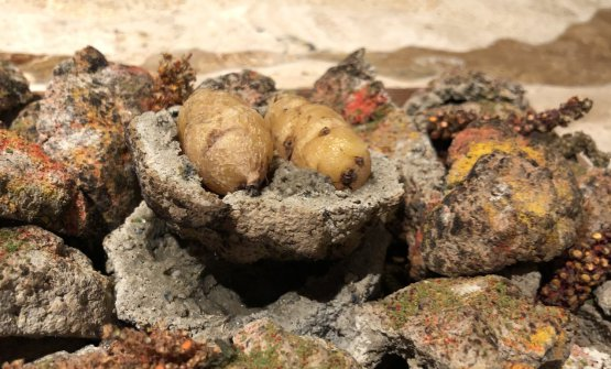 MIL Moray (3600m): tuberi, argilla e llipta