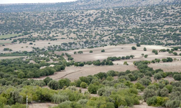 Gli ulivi nella riserva naturale della Valle dell'Irminio in provincia di Ragusa, terra dei Fratelli Aprile, azienda produttrice d'olio a Scicli, +39.0932.833828