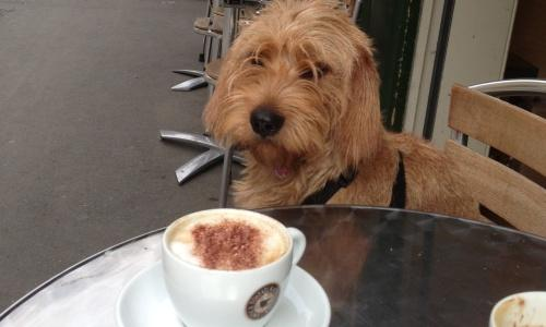 Amber's gourmet tour starts with a cappuccino at