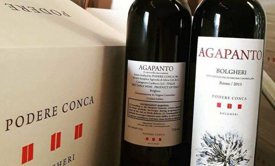L'Agapanto è il vino rosso dell'azienda