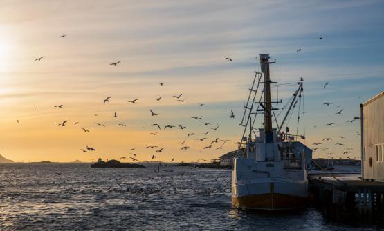 La Norvegia nei primi mesi dell'anno offre ai cultori del merluzzo uno dei suoi prodotti più ricercati, loSkrei, pescato da gennaio fino ad aprile nelle isole più a Nord, le mitiche Lofoten, e da consumare rigorosamente freschissimo