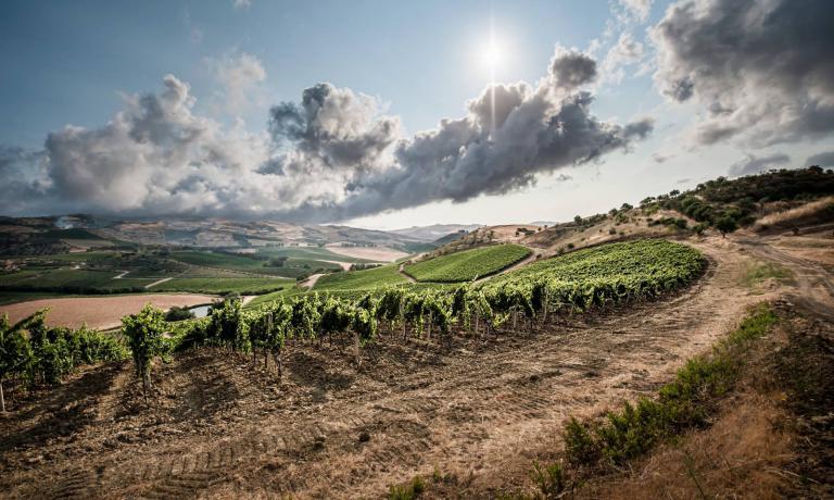 Lo splendido paesaggio di Regaleali, dove c'è una delle tenute di Tasca D'Almerita