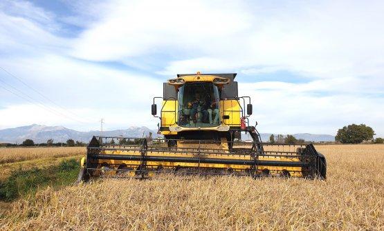 È tornata la coltivazione del riso nella Piana di
