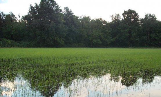Le risaie della Riserva