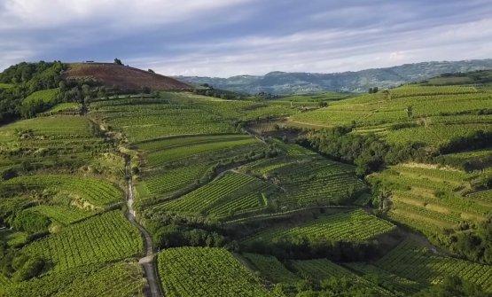 Soave si racconta: il vino, i territori e i produttori in 24 video