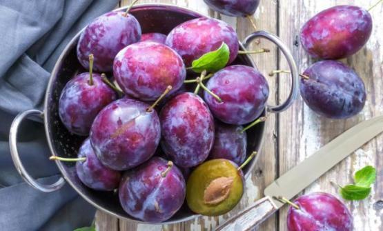 Le caratteristiche nutrizionali delleprugne della Californiasono simili a quelledelle susine fresche, con il vantaggio di avereun'estesa vita commerciale, di esseredisponibili nell'arco di tutto l'annoefacilissime daconservare