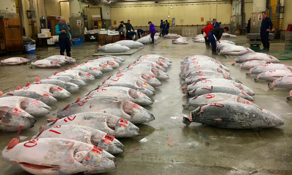 Vendita del tonno al celebreTsukiji Market, il più grande mercato del pianeta per il pesce, prossimo al trasloco.Dà un'idea del lavoro che c'è alla base per sfamare cotanta umanità, scrive per noi Gianni Revello, appassionato di gastronomia e arte contemporanea(fotobestlivingjapan.com)