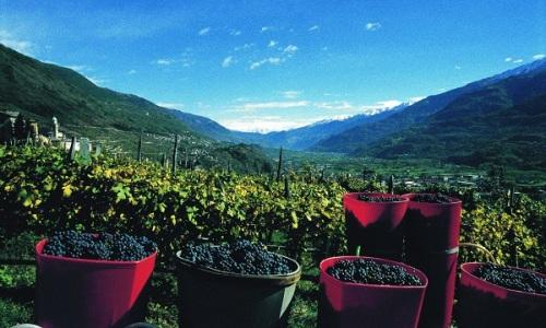 Le splendide colline vitate della Valtellina, comprensorio che in assomma �800 ettari di vigna, da cui si ricavano 30mila ettolitri di vino all'anno. Con grandi etichette, riassunte nella prima edizione della rassegna Grappolo d'Oro di Chiuro