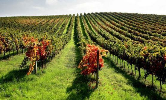 Angela ed Ercole Velenosi hanno fondato la casa vinicola che porta il loro cognome nel 1984, partendo da una superficie di soli 5 ettari. Oggi produce circa 2.500.000 bottiglie