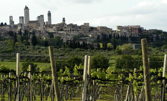 Vernaccia di San Gimignano - Anteprima 2020