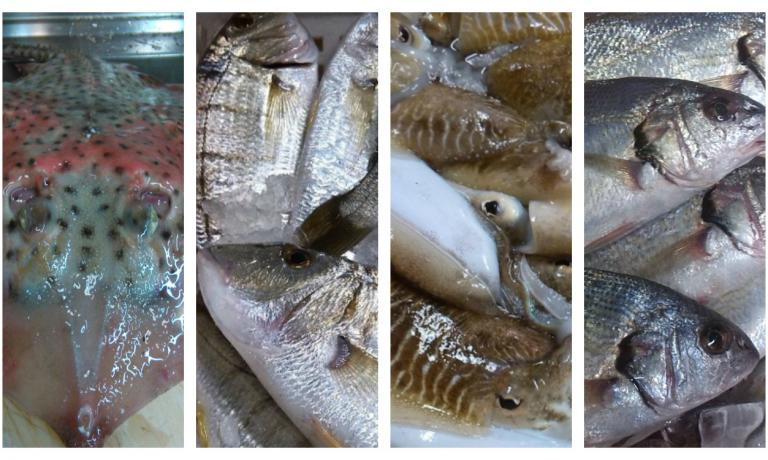 Vero pescato versiliese: razza, mormore, seppie, ombrine (foto Simona Fantoni)
