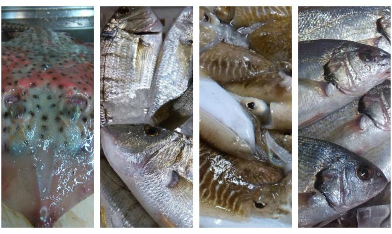 Vero pescato versiliese: razza, mormore, seppie, ombrine (fotoSimona Fantoni)