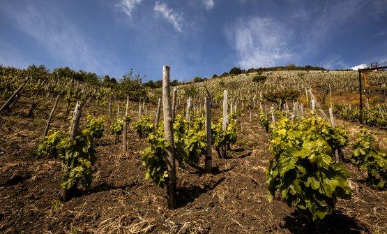 La difficoltà della viticoltura