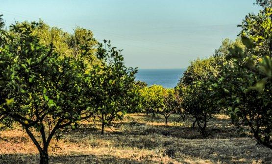 Vista del Mar Ionio dai giardini di Giardini d'Amore