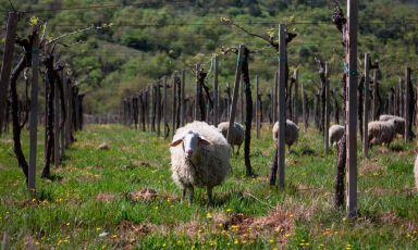 Valle Reale, i vini di montagna che raccontano la magia dell'Abruzzo