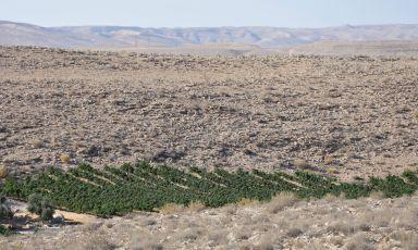 Le cattedrali nel deserto del Negev