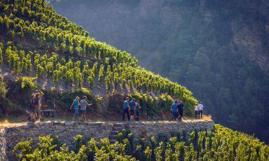 Svizzera meravigliosa - Otto itinerari da non perdere per scoprire il Vallese enologico (prima parte)