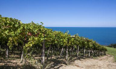 Abruzzo, paesaggio vitato con vista mare