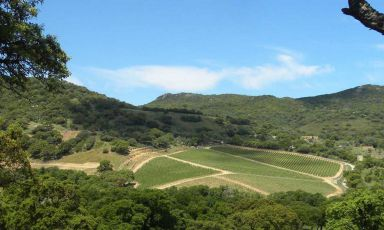 La Sardegna del vino vuole emergere: c'è un tesoro da scoprire