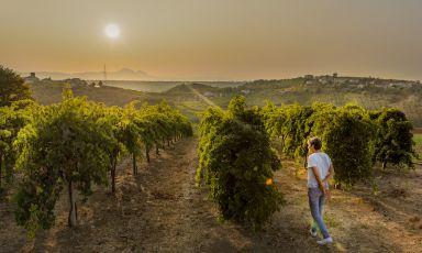 Valentina Di Camillo, l'Abruzzo e la ricerca della convivialità perduta