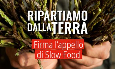 Ripartiamo dalla terra: l'appello di Slow Food che ciascuno di noi può firmare