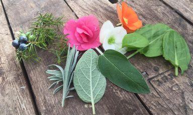 Alpin Herbs: la nuova vita di una famiglia di floricoltori