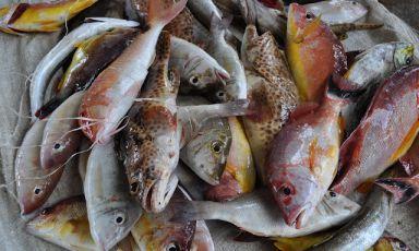 """Varietà di pesce """"di mangrovia"""" pescate nelle acque dello Sri Lanka: è l'equivalente del nostro """"pesce di scoglio"""", formula che designa le specie più pregiate. L'isola con capitale Colombo è molto interessante dal punto di vista ittico (foto Antonio Vasile)"""