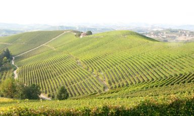 Dalle Langhe a Milano
