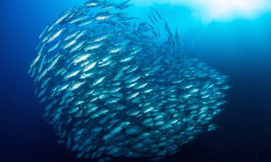 Chefs repopulating the oceans