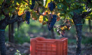 Le donne del vino guardano al futuro: quanti nuovi progetti