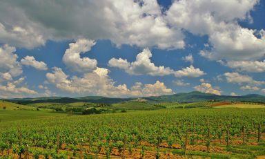 I vini della Maremma alla ricerca dell'eleganza. Con la firma del mare