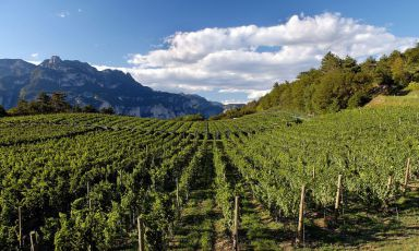 Trentino & Wine: un esordio convincente
