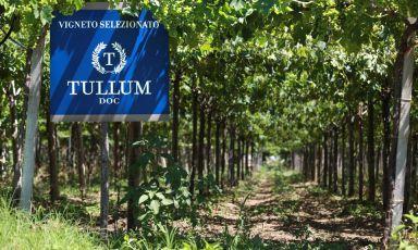 Tullum, la nuova DOCG, e i vini di Feudo Antico