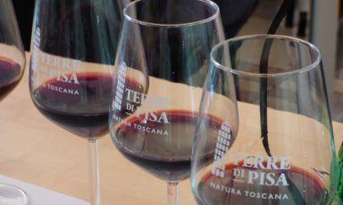 Quando le Terre di Pisa sono anche Terre del vino