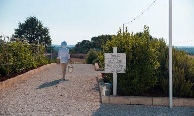 Ristorante Orto: la natura nel piatto tra i trulli alle porte di Monopoli, in Puglia