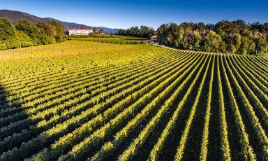 Svizzera meravigliosa - Andiamo alla scoperta (e all'assaggio) dei vini ticinesi