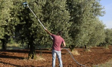 In many cases, olive picking is still done with ancient, traditional, long and demanding methods. Alpha is a tool, created by Luca Di Zio, that could help in this task without forsaking the integrity of the fruits