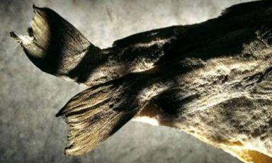 L'autentico baccalà è pescato all'amo e lavorato con cura e lentezza. I maestri nell'arte della salagione, conservazione e dissalatura sono gli spagnoli (fotoStockfood)
